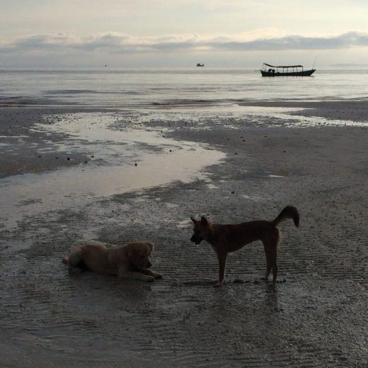 un cane chiamato cambogia