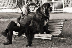 costellazioni animali cane uomo worsopp drive