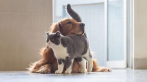 costellazioni animali cane gatto worsopp drive