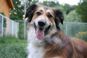 costellazioni animali cane worsopp drive