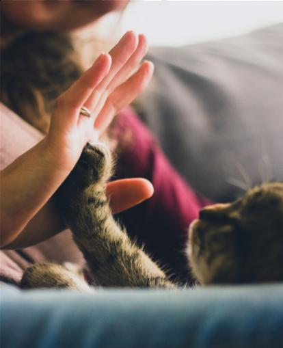 dimensione zampa gatto
